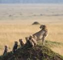 Safari tanzanie, une aventure extraordinaire